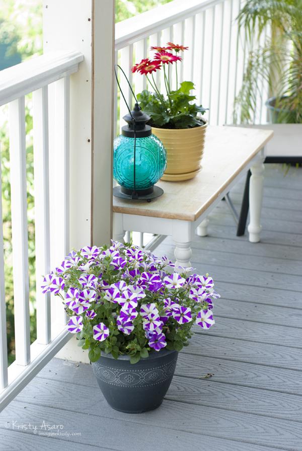 Kristy Asaro | Petunias