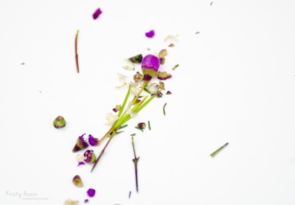 Kristy Asaro | Florals